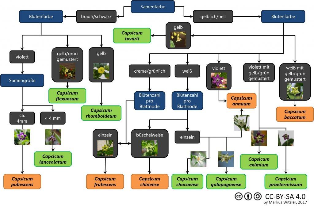 Arten-Unterscheidung-cc.jpg
