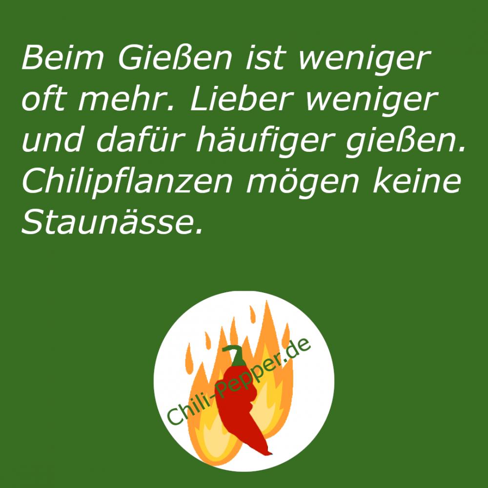 Keine_Naesse.png