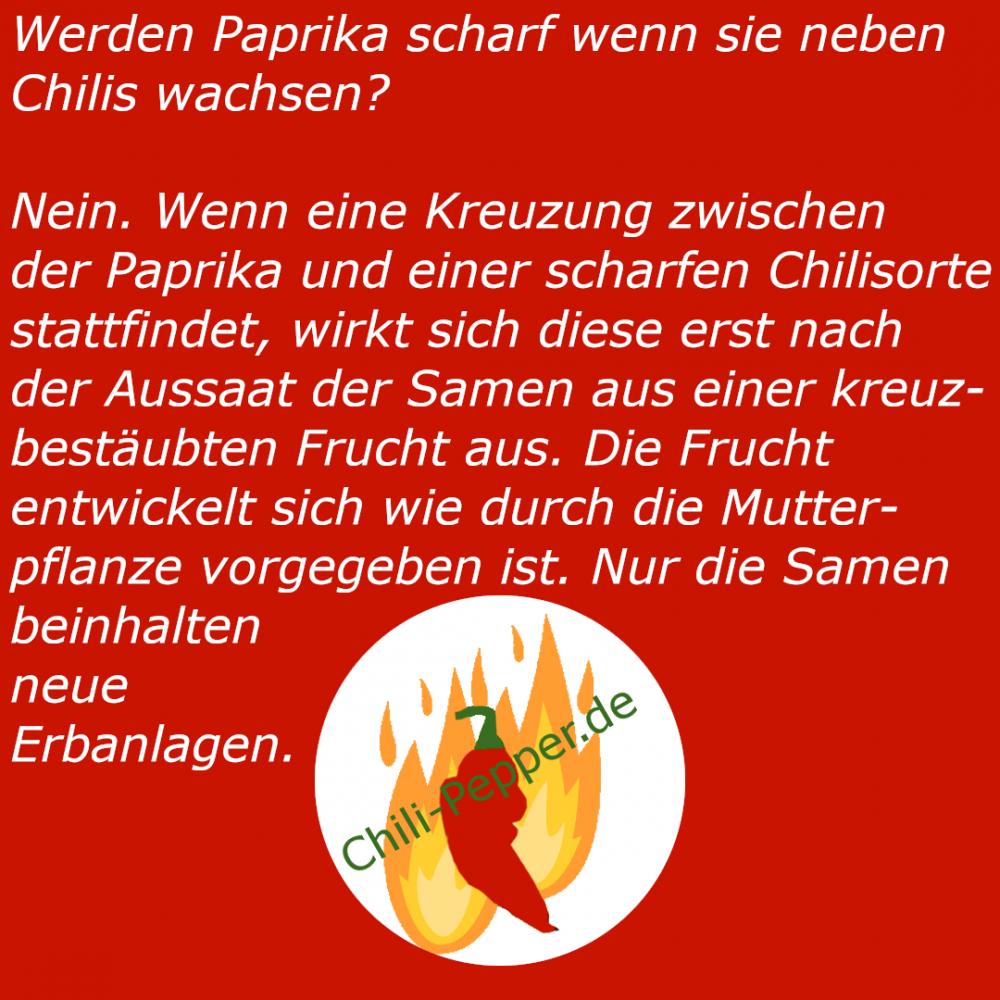Paprika_neben_Chili.png