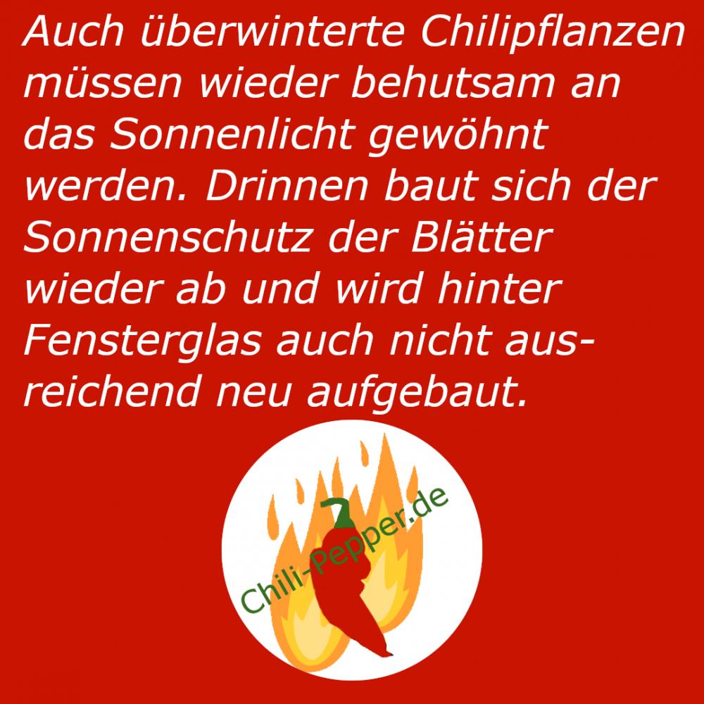 Sonneneingewoehnung_Ueberwinterer.png