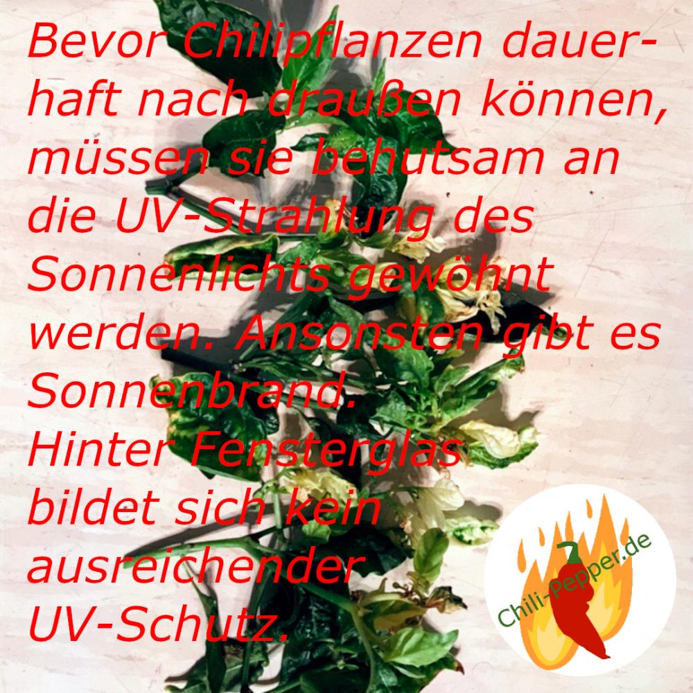 UV-Schutz.png